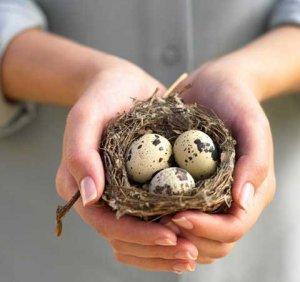 Перепелиные яйца излечивают эпилепсию и превосходят «Виагру»
