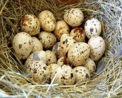 Правильное хранение яиц и определение их свежести